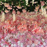 Trius Winery Rose